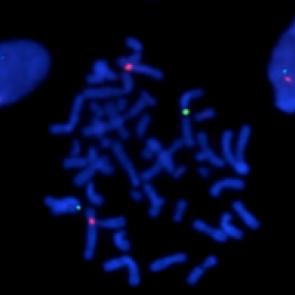 Laboratoire Structure et Instabilité des Génomes