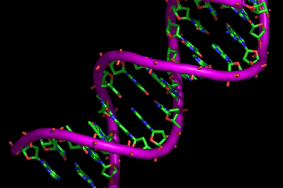 Transformation de l'ADN