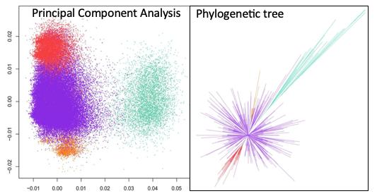 Classification d'ADN alpha satellite de cercopithecus pogonias ©Loic.Ponger