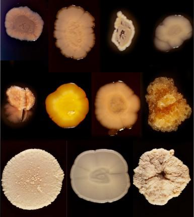 kefir microbes ©JB.Boulé