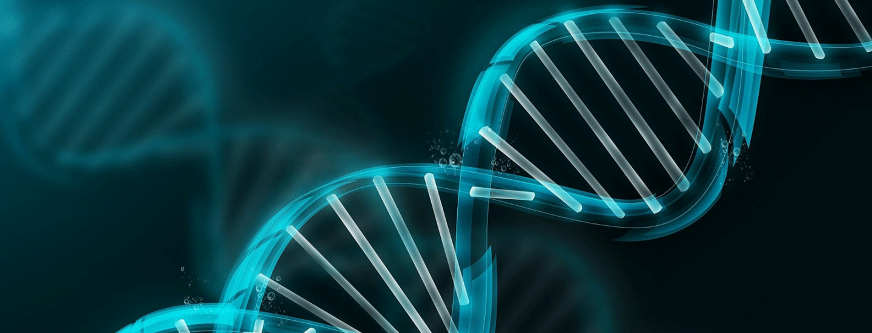 Représentation de l'ADN / Josseluics3 / CC BY-SA 4.0 / Wikimedia Commons